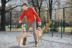 Betriebshaftpflichtversicherung Hundetrainer – Frau trainiert mit Hunden