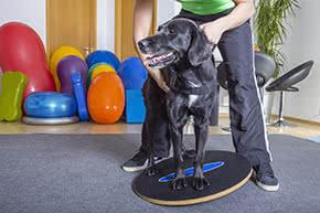 Berufshaftpflichtversicherung Tierphysiotherapeut – Hund mit Therapeut