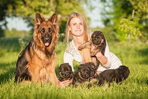 Betriebshaftpflichtversicherung Hundezüchter