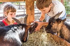 Tierhalterhaftpflicht - Kinder füttern Ziegen