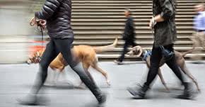 Tierhalterhaftpflicht - Mit Hunden gassi gehen